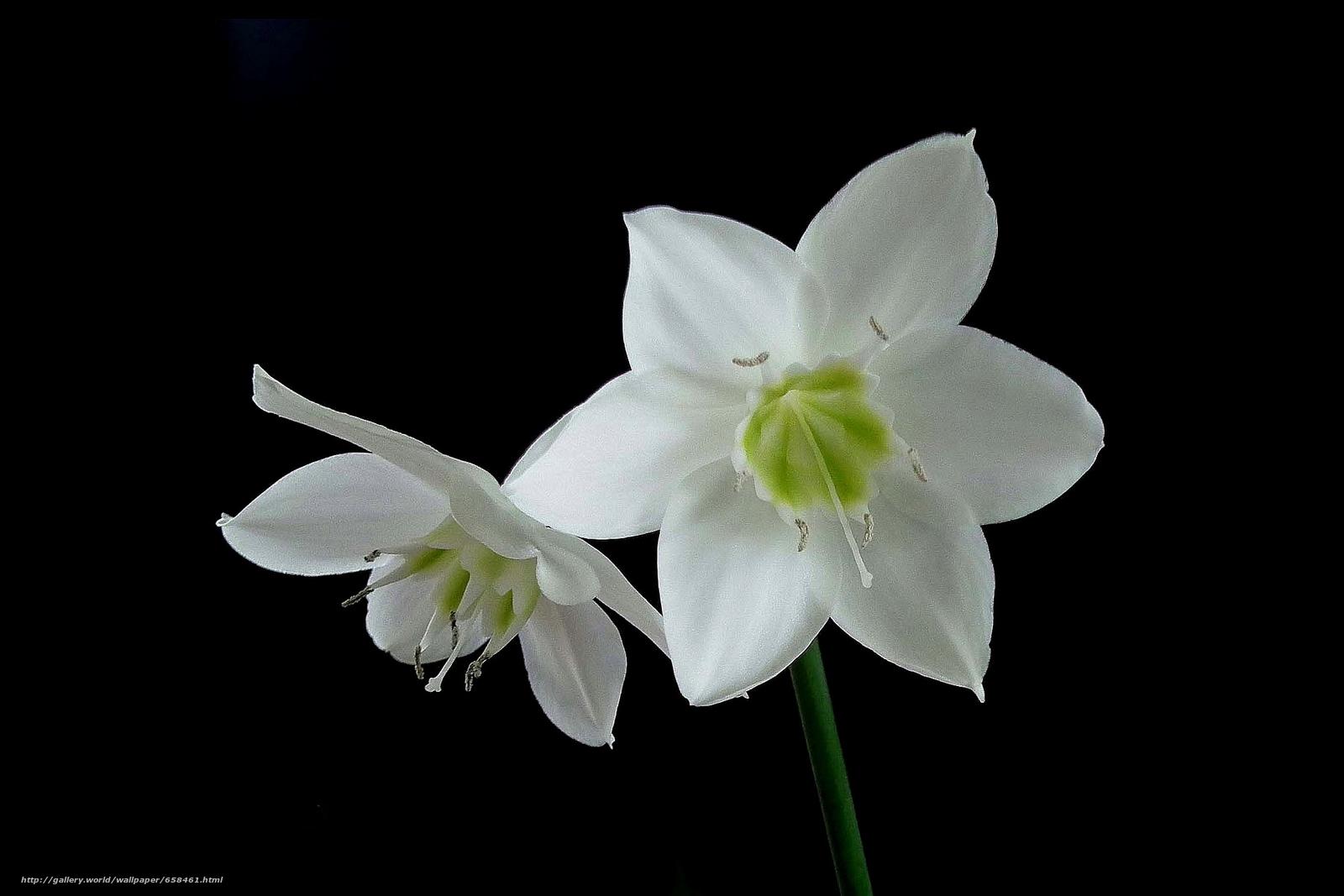 Скачать обои цветок,  цветы,  флора бесплатно для рабочего стола в разрешении 2100x1400 — картинка №658461