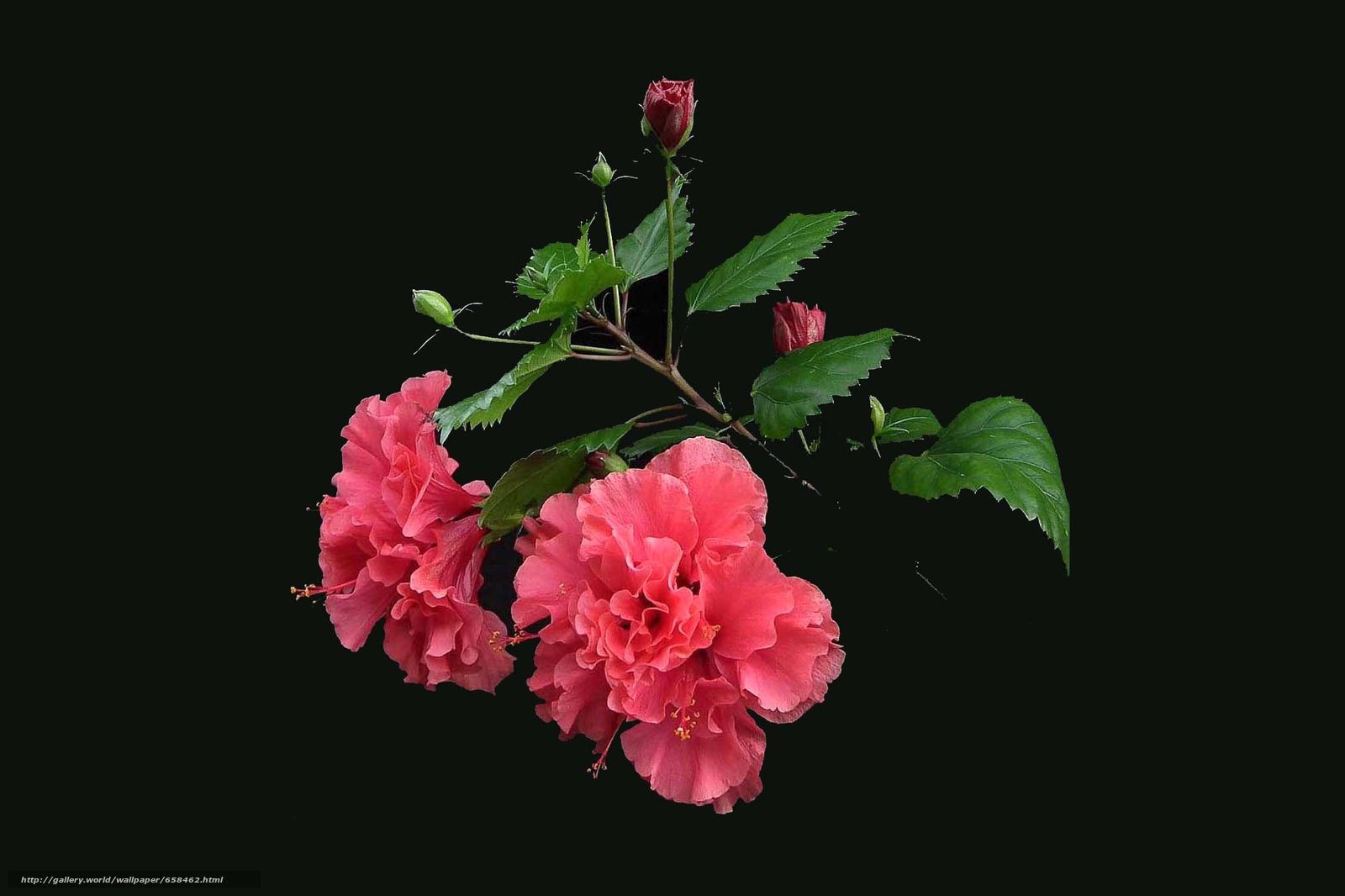 scaricare gli sfondi fiore,  Fiori,  flora Sfondi gratis per la risoluzione del desktop 2915x1942 — immagine №658462