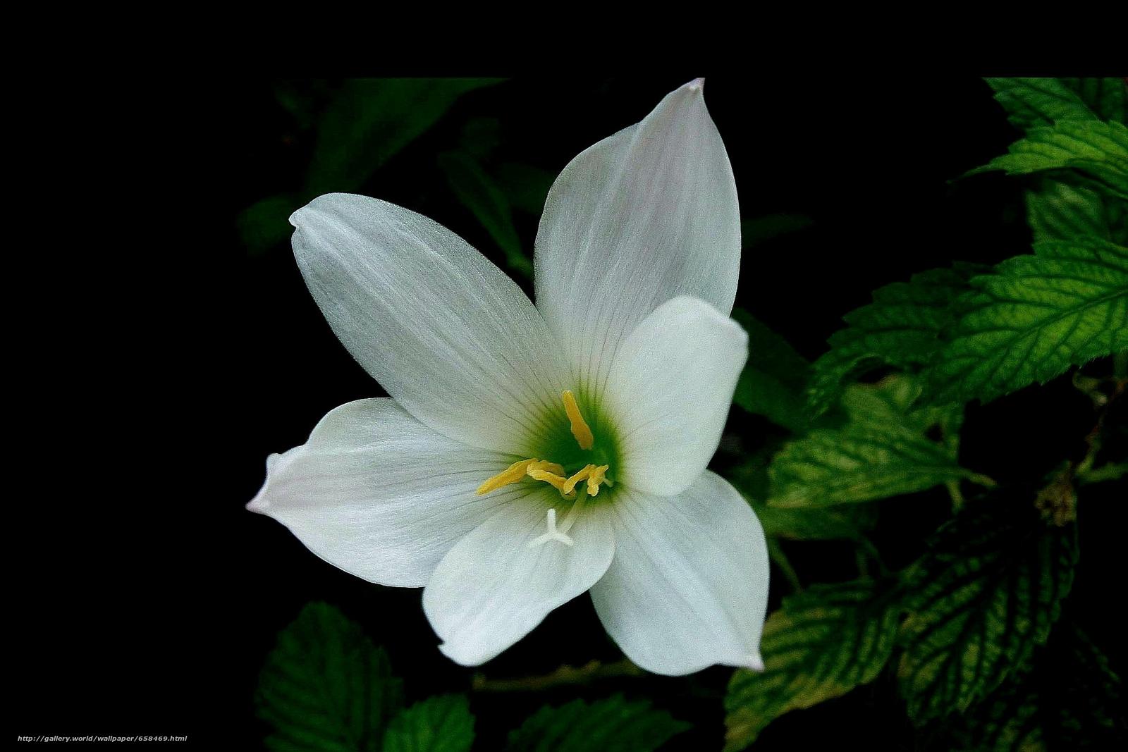 scaricare gli sfondi fiore,  Fiori,  flora Sfondi gratis per la risoluzione del desktop 2190x1460 — immagine №658469