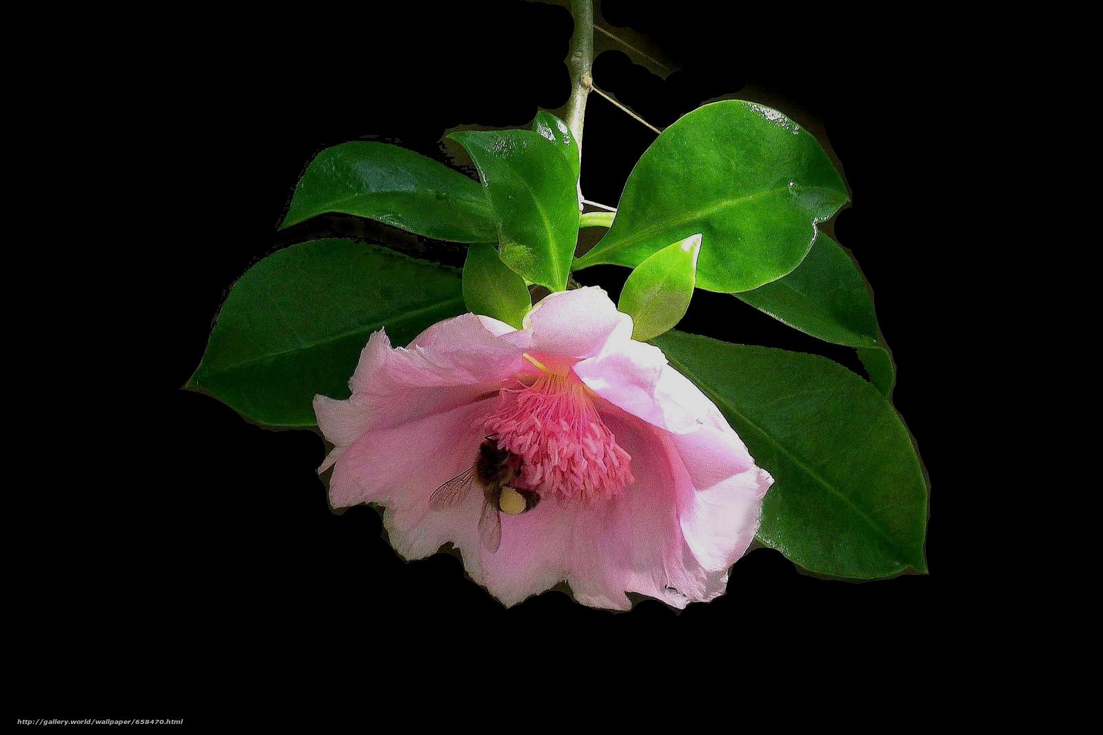 下载壁纸 花,  花卉,  植物群 免费为您的桌面分辨率的壁纸 2550x1700 — 图片 №658470