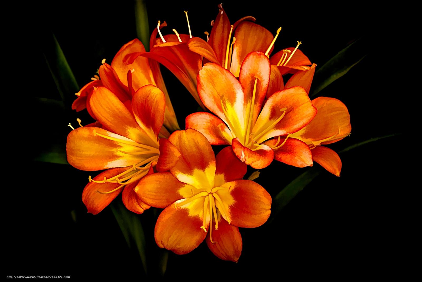 pobra tapety kwiat,  Kwiaty,  flora Darmowe tapety na pulpit rozdzielczoci 7360x4912 — zdjcie №658471