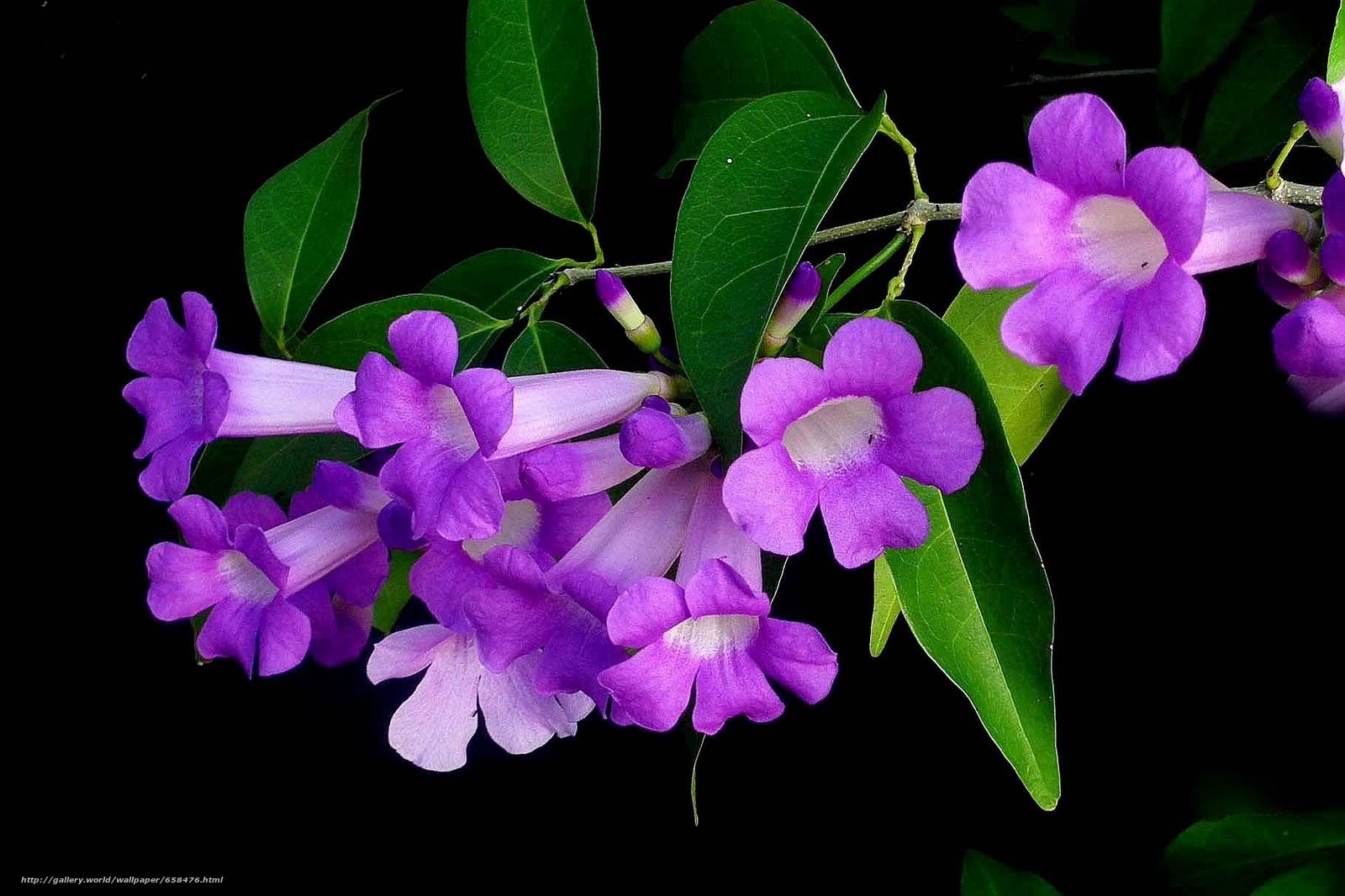Скачать обои цветок,  цветы,  флора бесплатно для рабочего стола в разрешении 1821x1213 — картинка №658476