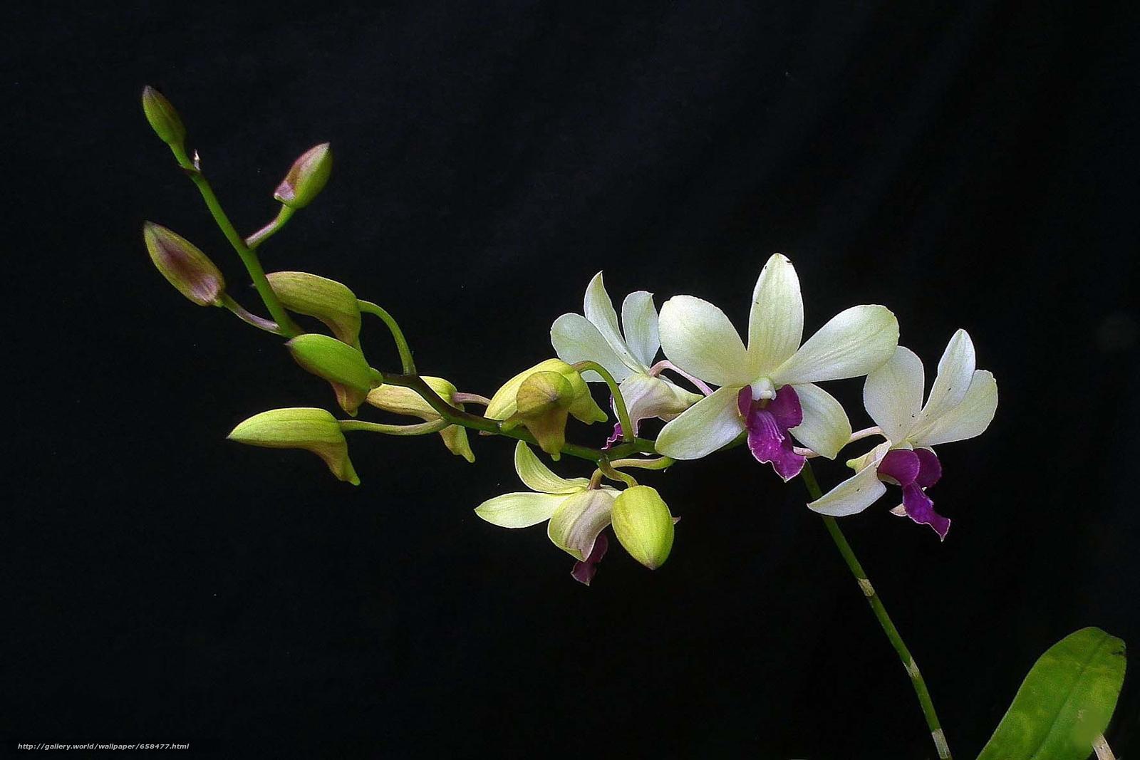 Скачать обои цветок,  цветы,  флора бесплатно для рабочего стола в разрешении 1776x1184 — картинка №658477