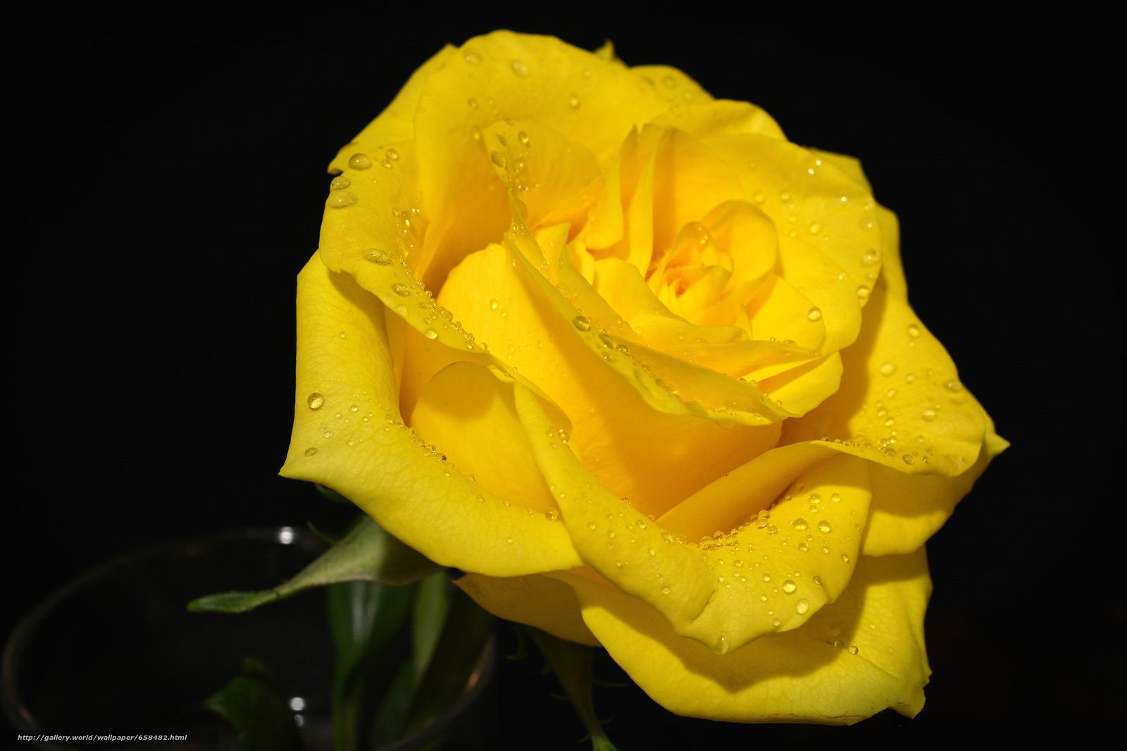 壁紙をダウンロード 花,  フラワーズ,  フローラ,  ローズ デスクトップの解像度のための無料壁紙 6000x4000 — 絵 №658482