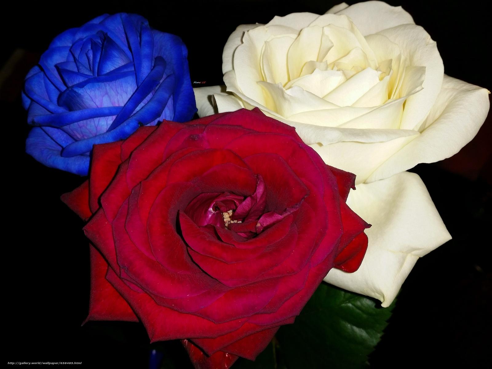 scaricare gli sfondi fiore,  Fiori,  flora,  rosa Sfondi gratis per la risoluzione del desktop 3265x2449 — immagine №658485