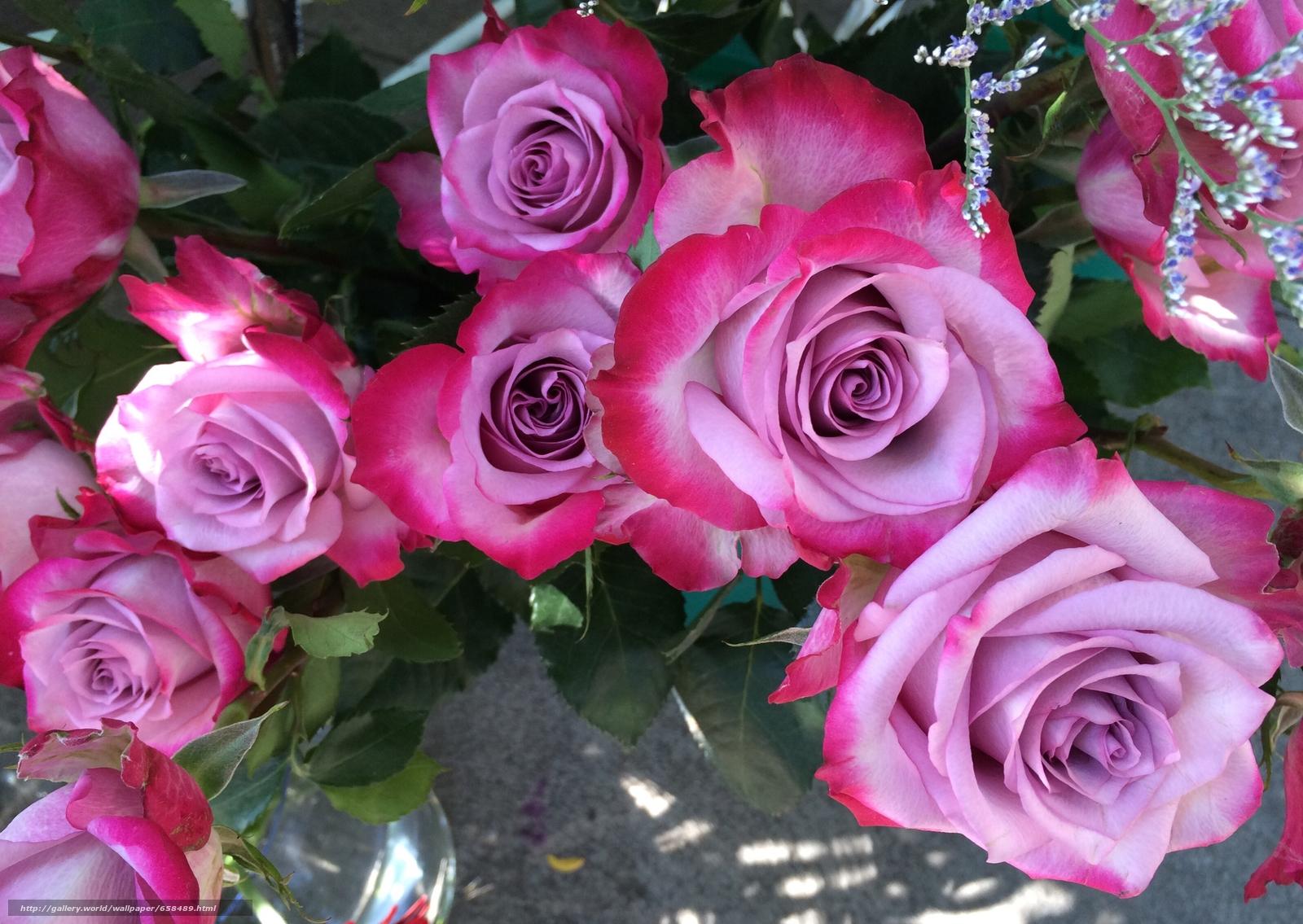 scaricare gli sfondi fiore,  Fiori,  flora,  rosa Sfondi gratis per la risoluzione del desktop 3260x2313 — immagine №658489