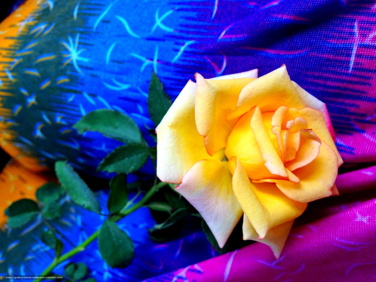 Скачать обои цветок,  цветы,  флора,  роза бесплатно для рабочего стола в разрешении 3264x2448 — картинка №658496