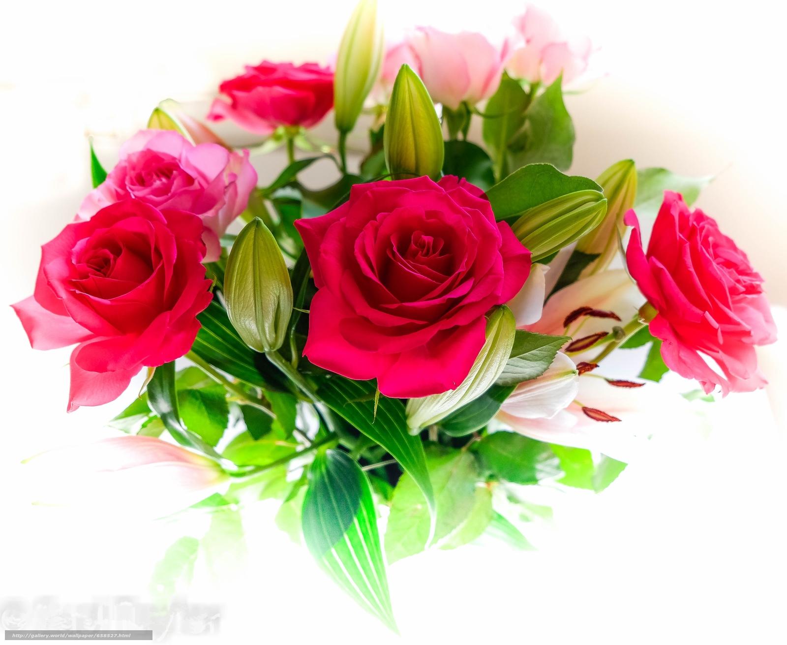 Tlcharger Fond d'ecran fleur,  Fleurs,  flore,  rose Fonds d'ecran gratuits pour votre rsolution du bureau 3705x3035 — image №658527