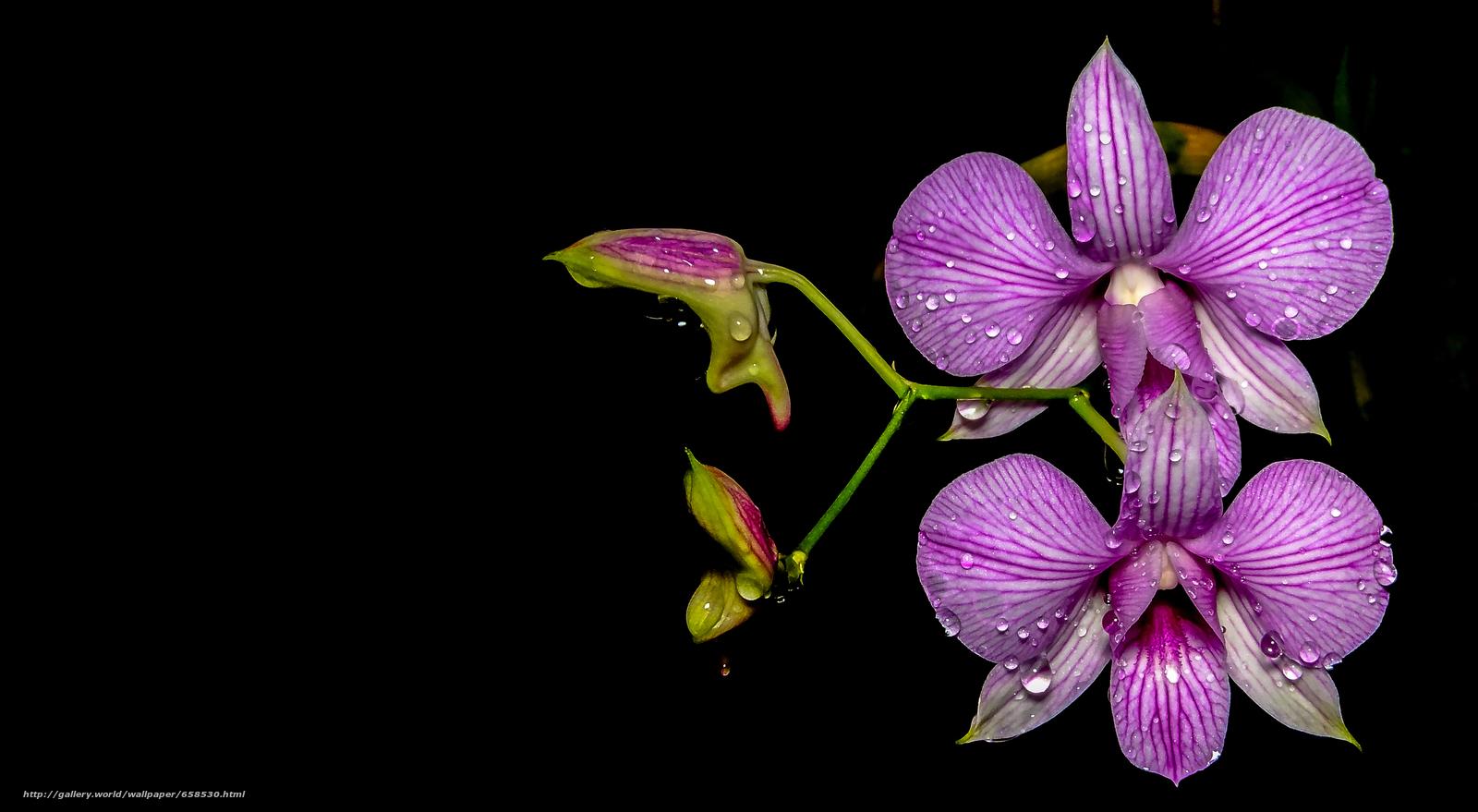 Скачать обои цветок,  цветы,  флора,  орхидея бесплатно для рабочего стола в разрешении 4608x2532 — картинка №658530