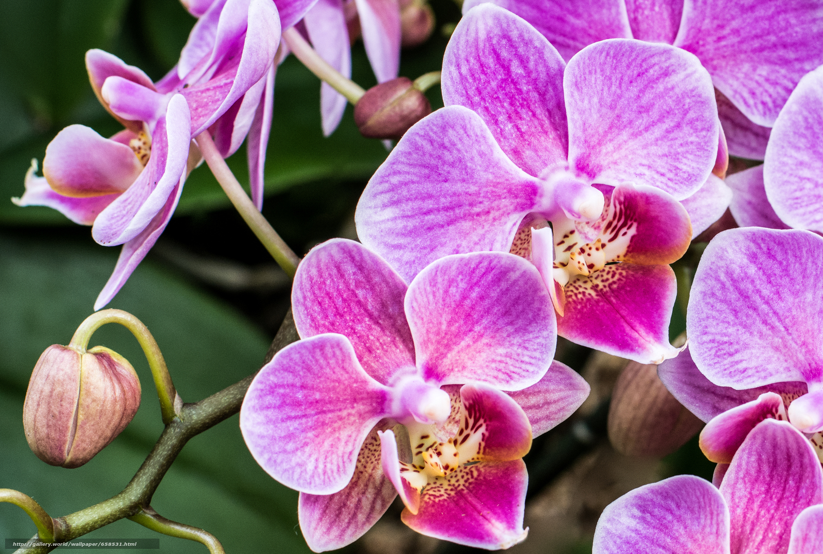 Download wallpaper flower,  Flowers,  flora,  orchid free desktop wallpaper in the resolution 3240x2183 — picture №658531