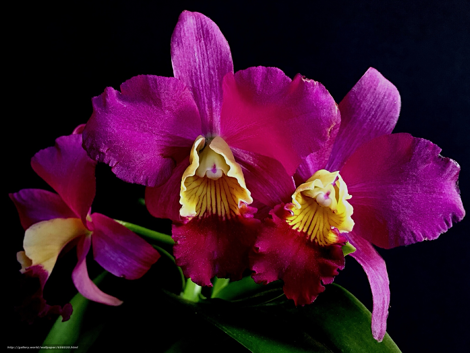 Download wallpaper flower,  Flowers,  flora,  orchid free desktop wallpaper in the resolution 2048x1536 — picture №658535