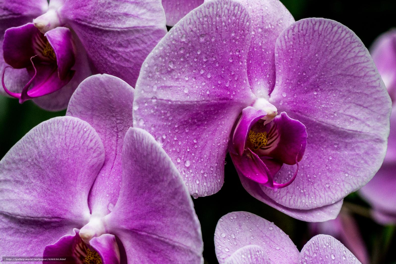 Download Hintergrund Blume,  Blumen,  flora,  Orchidee Freie desktop Tapeten in der Auflosung 3486x2324 — bild №658536