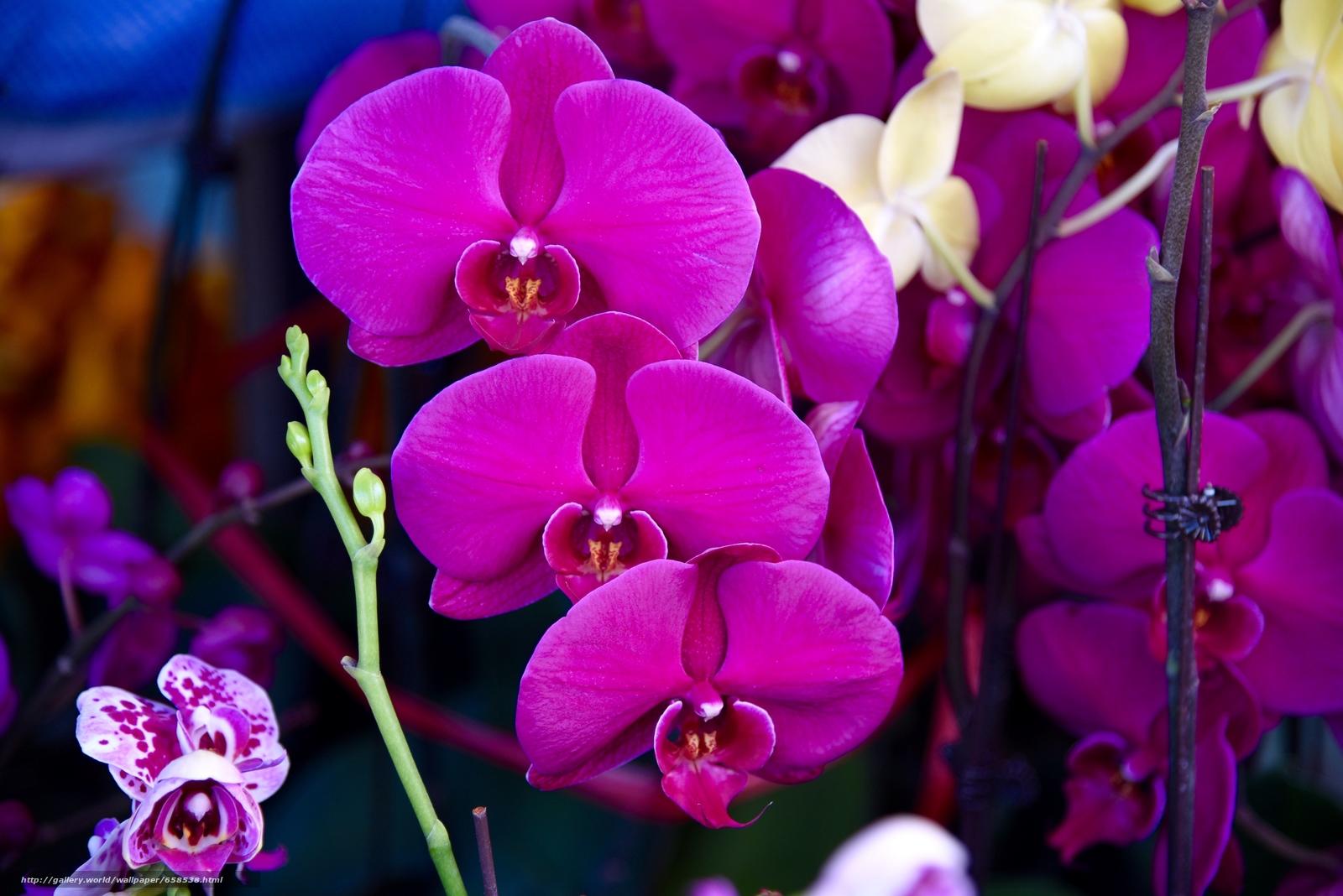 Download Hintergrund Blume,  Blumen,  flora,  Orchidee Freie desktop Tapeten in der Auflosung 6016x4016 — bild №658538