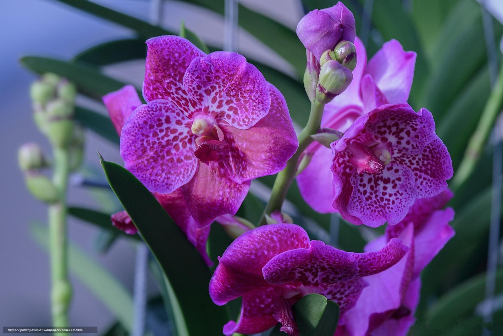 Скачать обои цветок,  цветы,  флора,  орхидея бесплатно для рабочего стола в разрешении 2048x1367 — картинка №658540