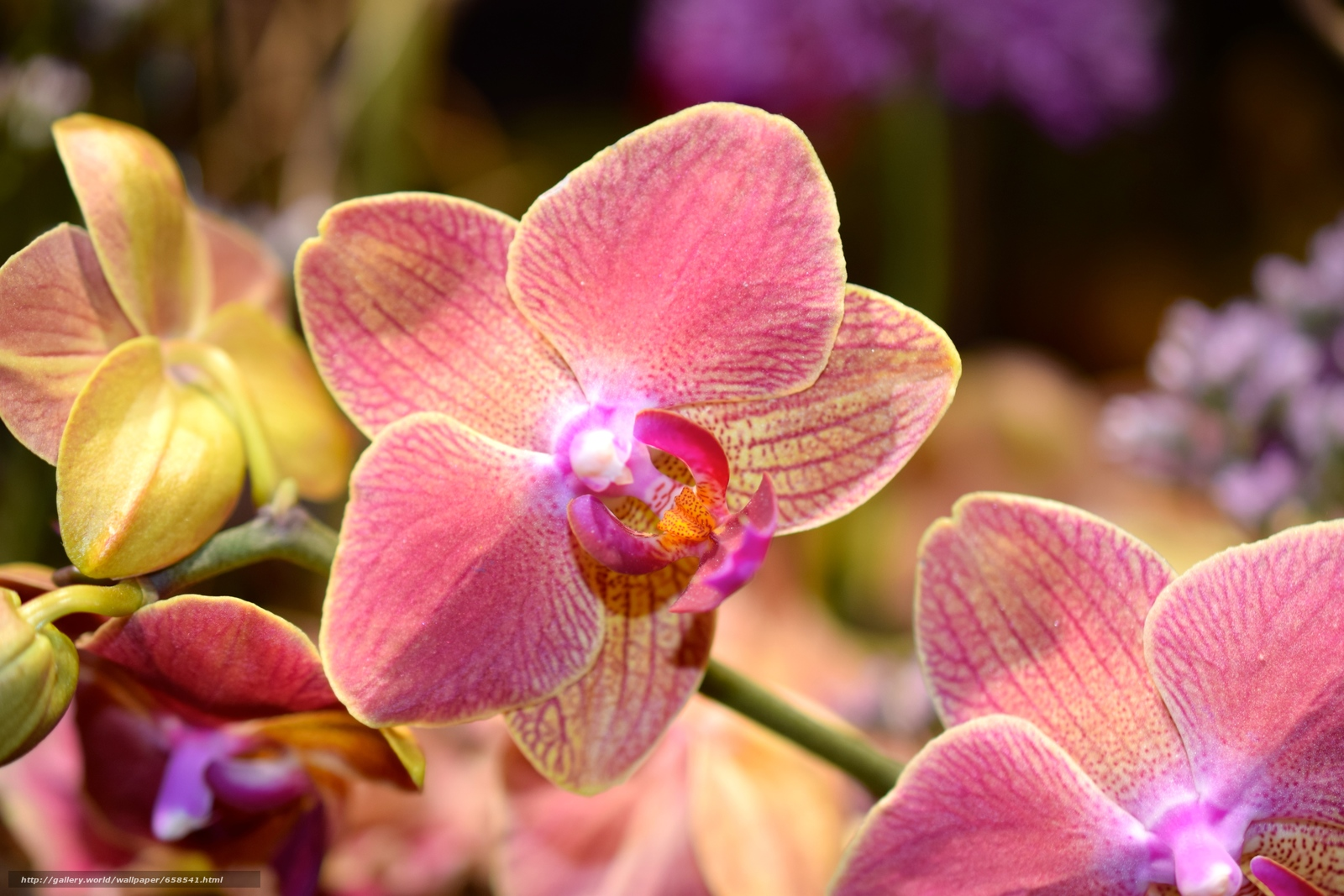 Download wallpaper flower,  Flowers,  flora,  orchid free desktop wallpaper in the resolution 6000x4000 — picture №658541