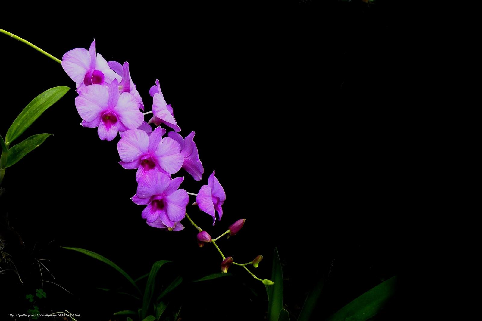 Скачать обои цветок,  цветы,  флора,  орхидея бесплатно для рабочего стола в разрешении 3172x2115 — картинка №658542