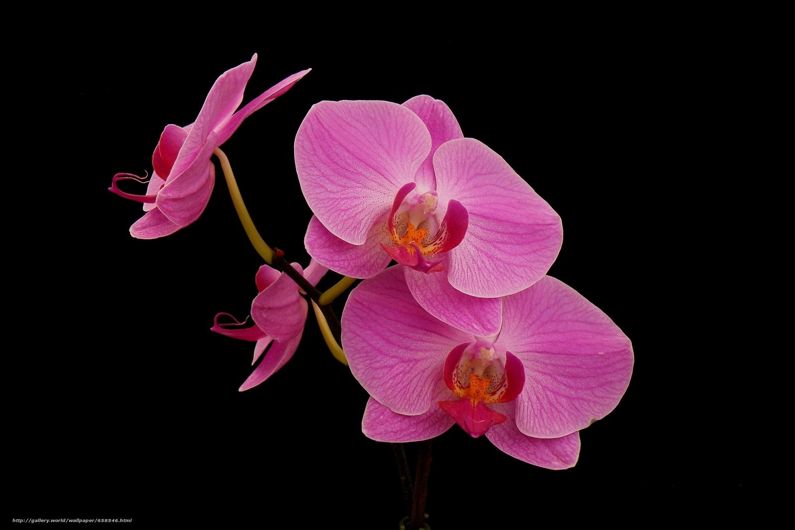 Скачать обои цветок,  цветы,  флора,  орхидея бесплатно для рабочего стола в разрешении 3777x2518 — картинка №658546