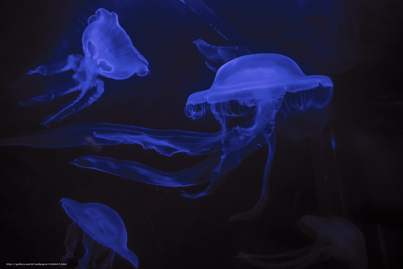 Download wallpaper jellyfish,  Jellyfish,  Underwater World,  water free desktop wallpaper in the resolution 5184x3456 — picture №658607