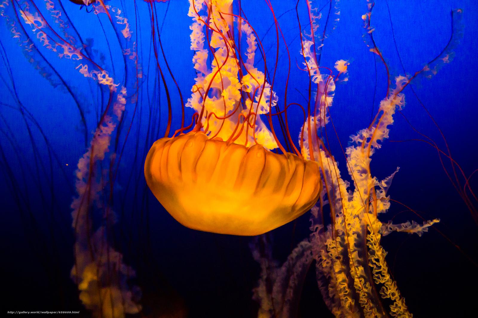 Tlcharger Fond d'ecran méduses,  Jellyfish,  Monde sous-marin,  eau Fonds d'ecran gratuits pour votre rsolution du bureau 5184x3456 — image №658609