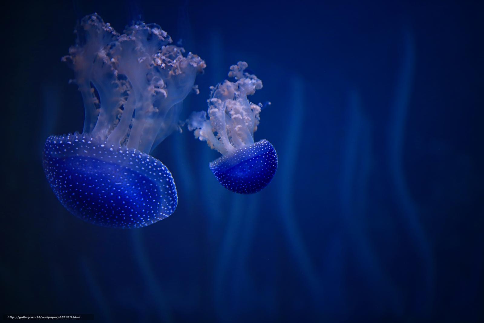 pobra tapety meduza,  Meduza,  Podwodny świat,  woda Darmowe tapety na pulpit rozdzielczoci 4000x2666 — zdjcie №658613