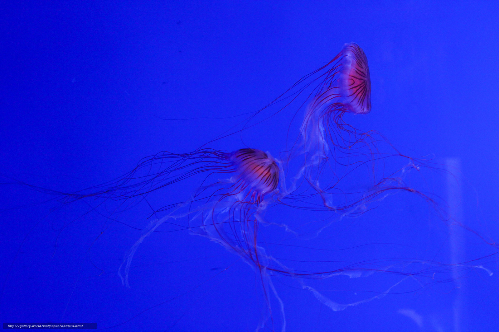 Download wallpaper jellyfish,  Jellyfish,  Underwater World,  water free desktop wallpaper in the resolution 5184x3456 — picture №658615