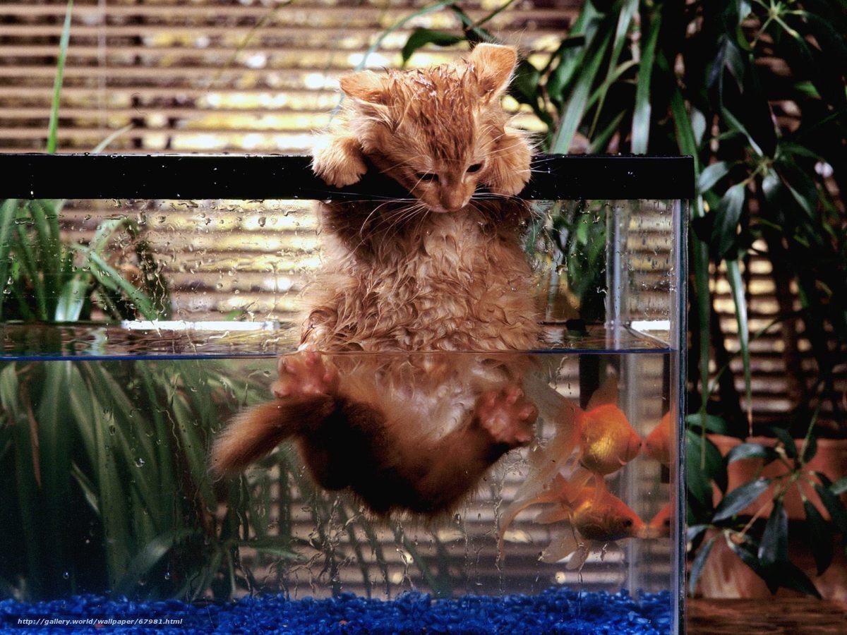 scaricare gli sfondi gatto,  rosso,  acquario,  pesce Sfondi gratis per la risoluzione del desktop 1600x1200 — immagine №67981