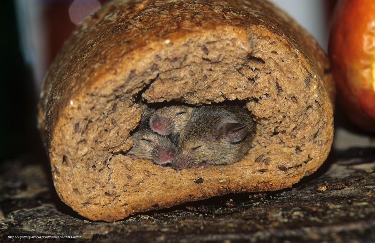 Скачать обои мыши,  нора,  хлеб бесплатно для рабочего стола в разрешении 5404x3501 — картинка №68683