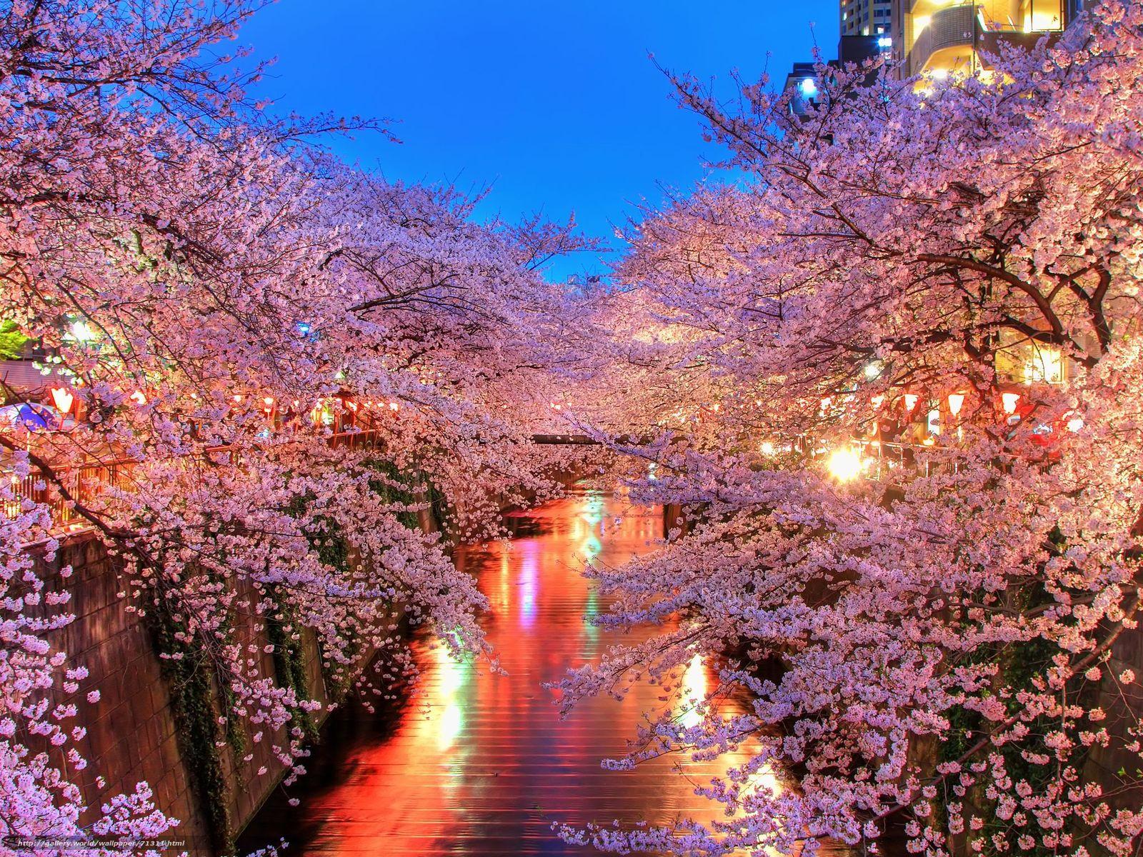 壁紙をダウンロード チャンネル 桜 点灯 デスクトップの解像度のための無料壁紙 48x1536 絵