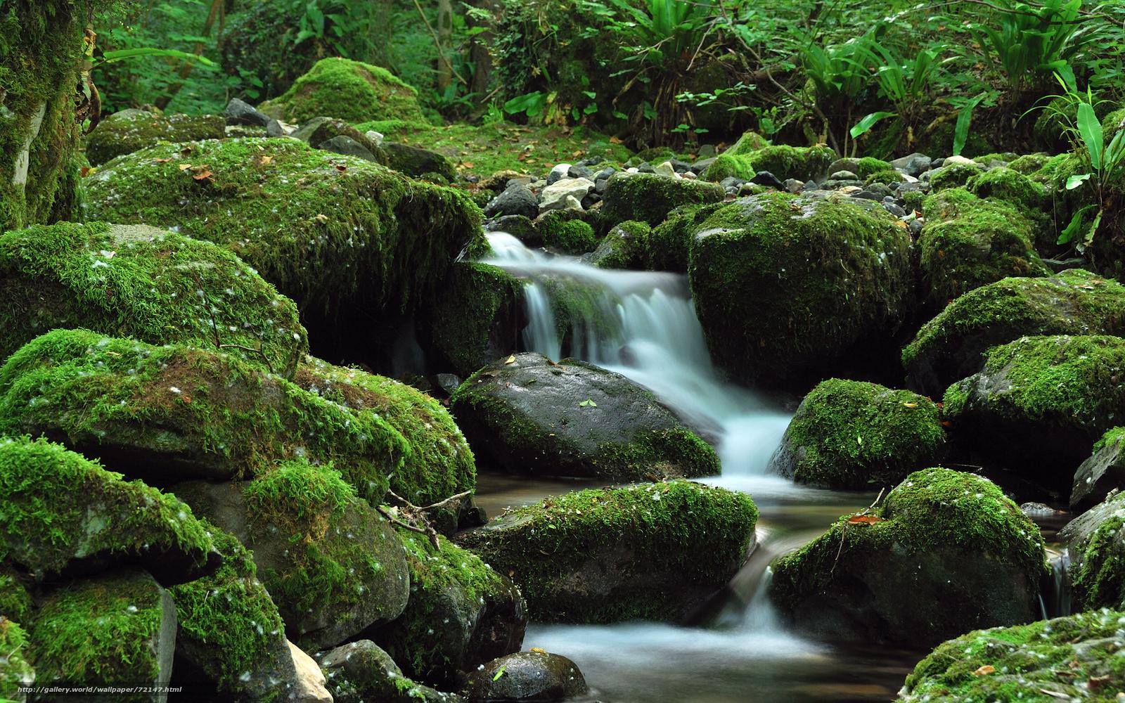 Tlcharger fond d 39 ecran lgumes verts noyaux cascade for Jardin japonais fond d ecran
