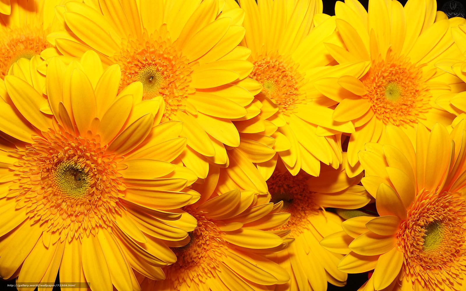 wallpaper fiori gialli