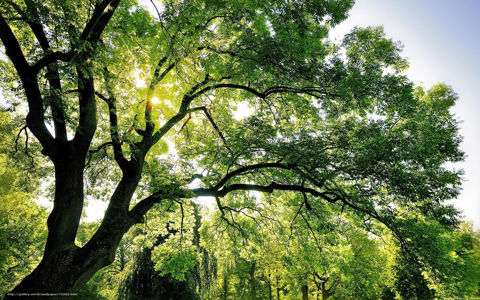Tlcharger Fond D 39 Ecran Nature Arbre Ciel Papier Peint Fonds D 39 Ecran Gratuits Pour Votre