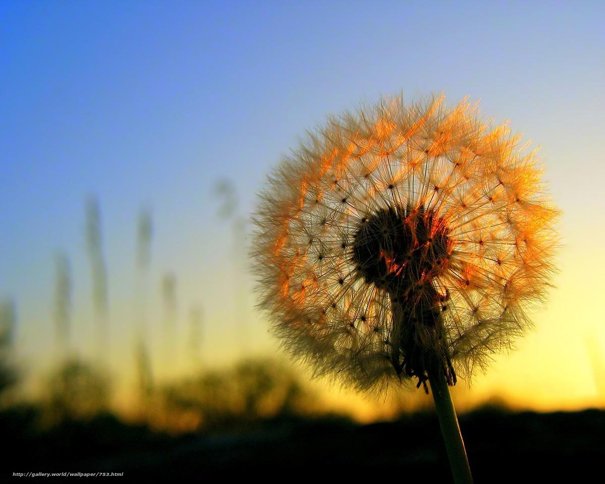 Скачать обои цветы,  солнце,  закат бесплатно для рабочего стола в разрешении 1280x1024 — картинка №753