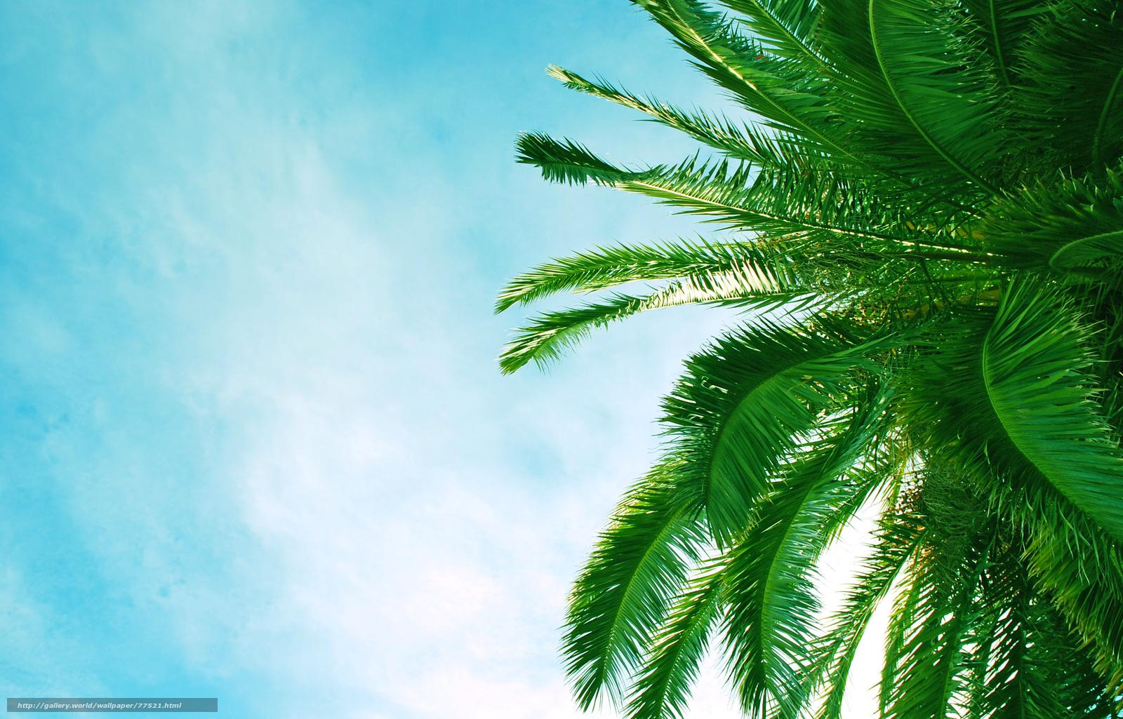 скачать  пальмы