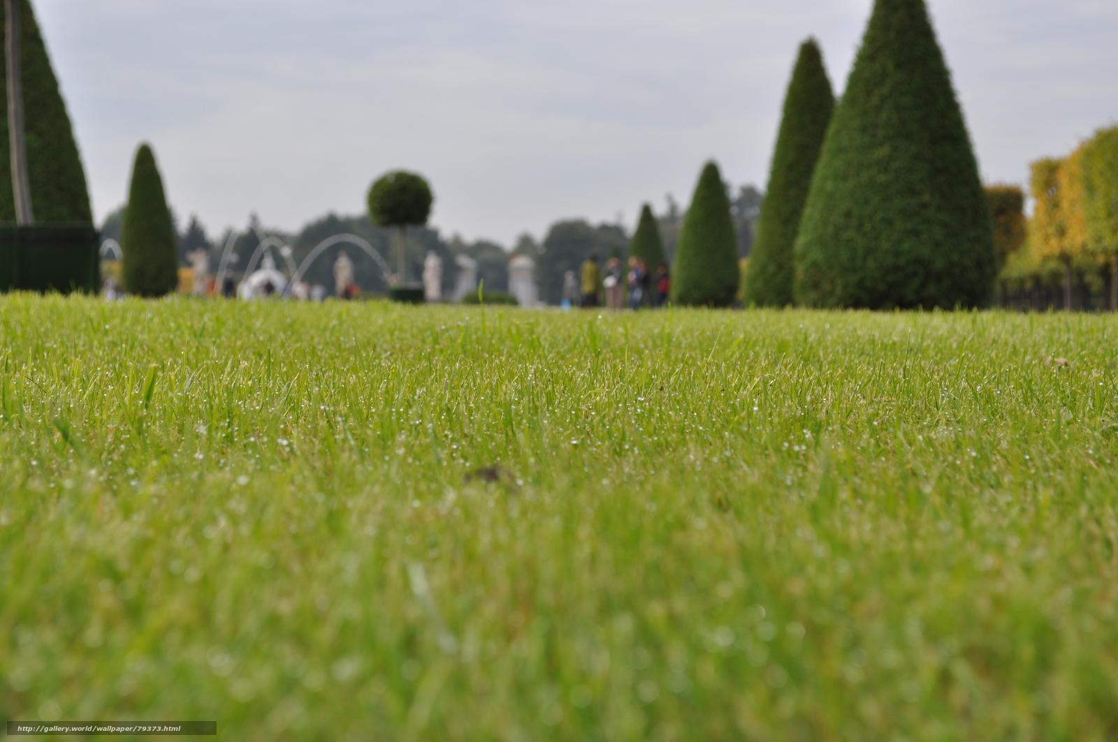 Download Wallpaper Grass Park Lawn Free Desktop Wallpaper In The Resolution 4288x2848 Picture 79373