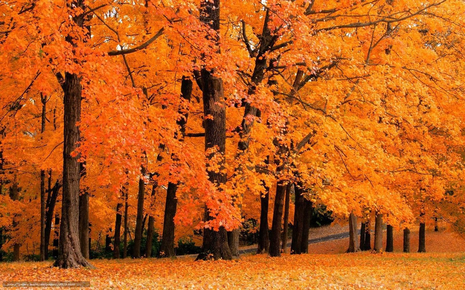 Осенние Обои Для Рабочего Стола Бесплатные