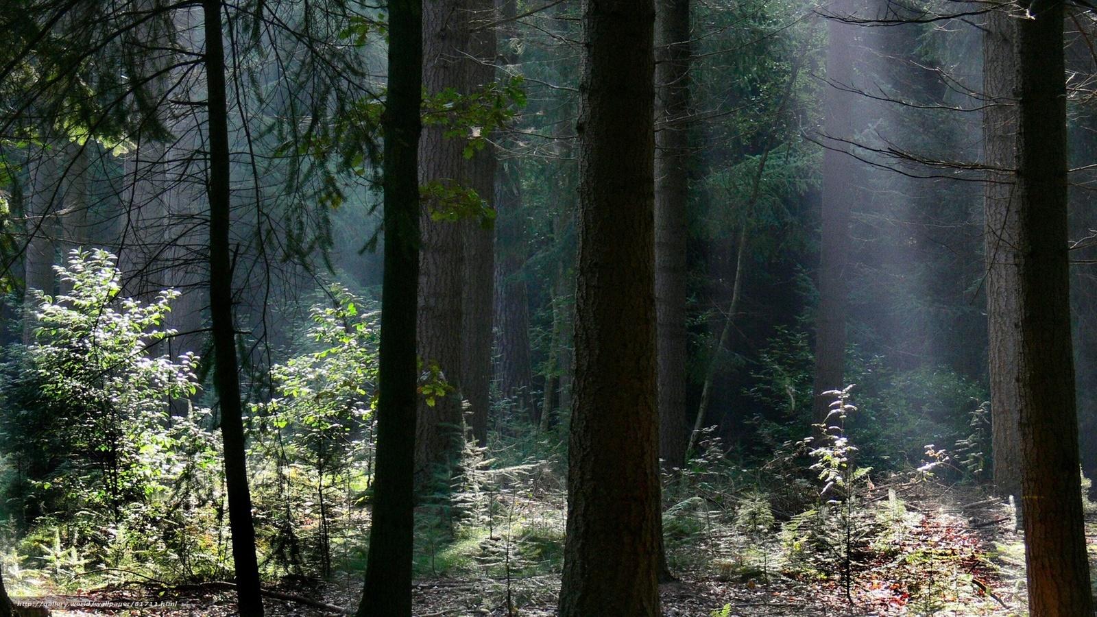 Скачать обои лес,  тёмный,  зелень бесплатно для рабочего стола в разрешении 1920x1080 — картинка №81711