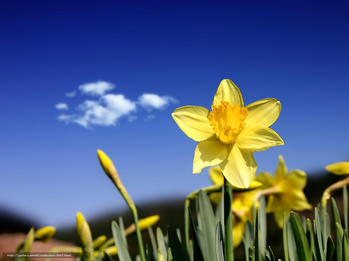 descarca imagini de fundal floare,  galben,  cer Imagini de fundal gratuite pentru rezoluia desktop 1600x1200 — imagine №897