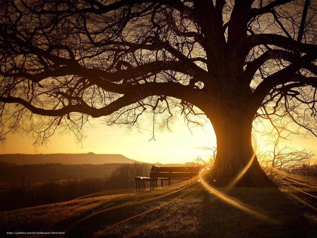 Скачать обои восход,  дерево,  солнце бесплатно для рабочего стола в разрешении 1600x1200 — картинка №899