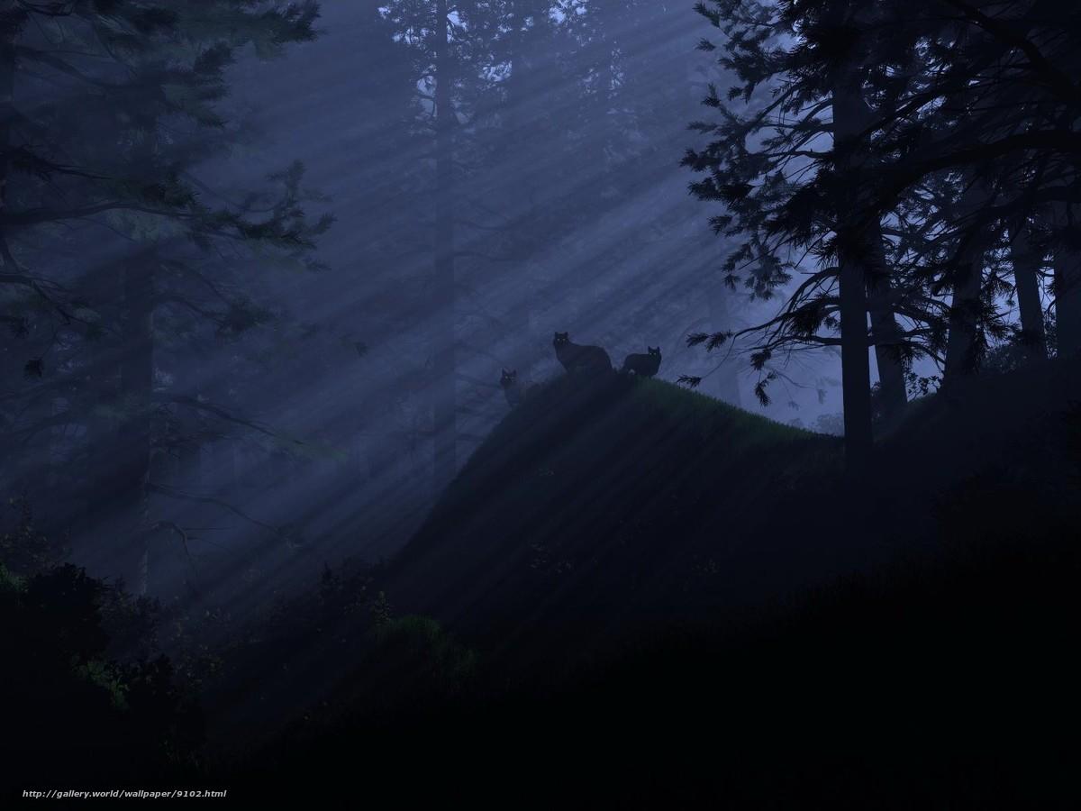Tlcharger Fond d'ecran fort,  Loups,  lumire,  nuit Fonds d'ecran gratuits pour votre rsolution du bureau 1600x1200 — image №9102