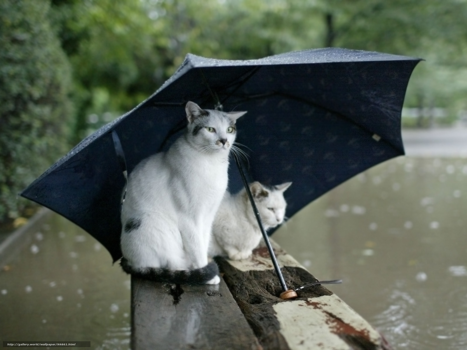 скачать картинки дождь осень