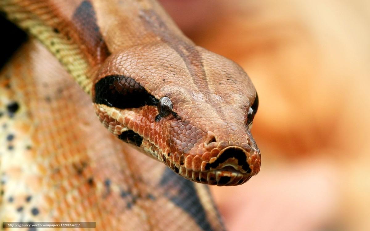 Фото кобра крупным планом 6 фотография