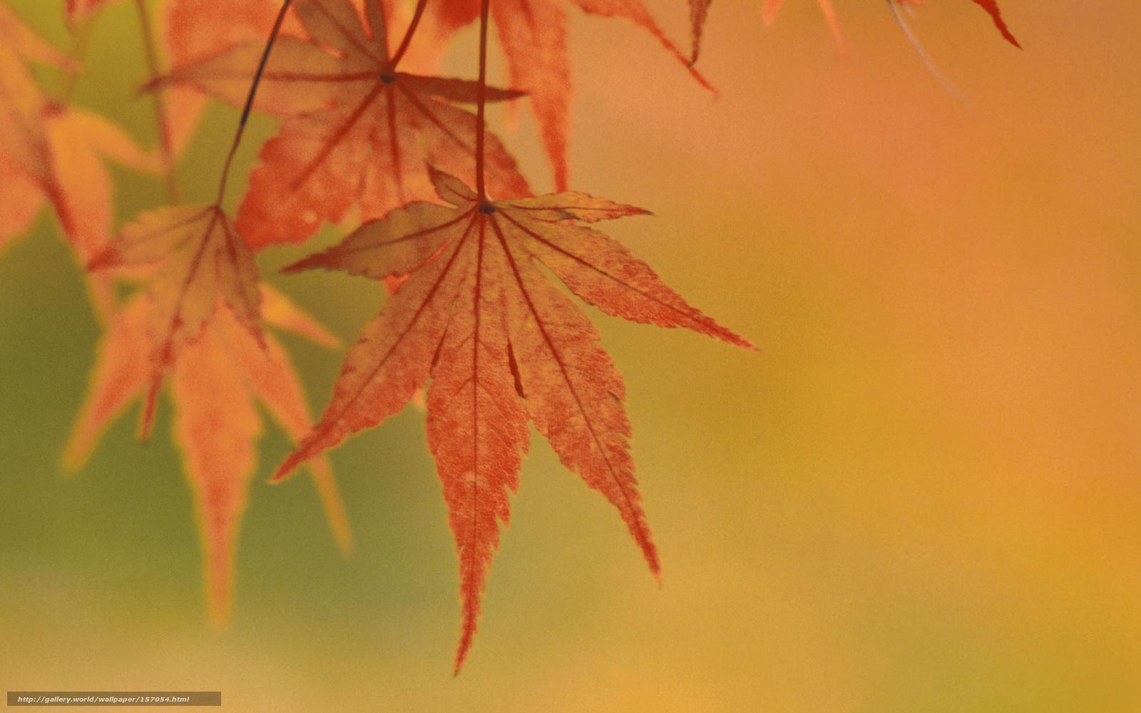 Смотреть цвета клена 8 фотография
