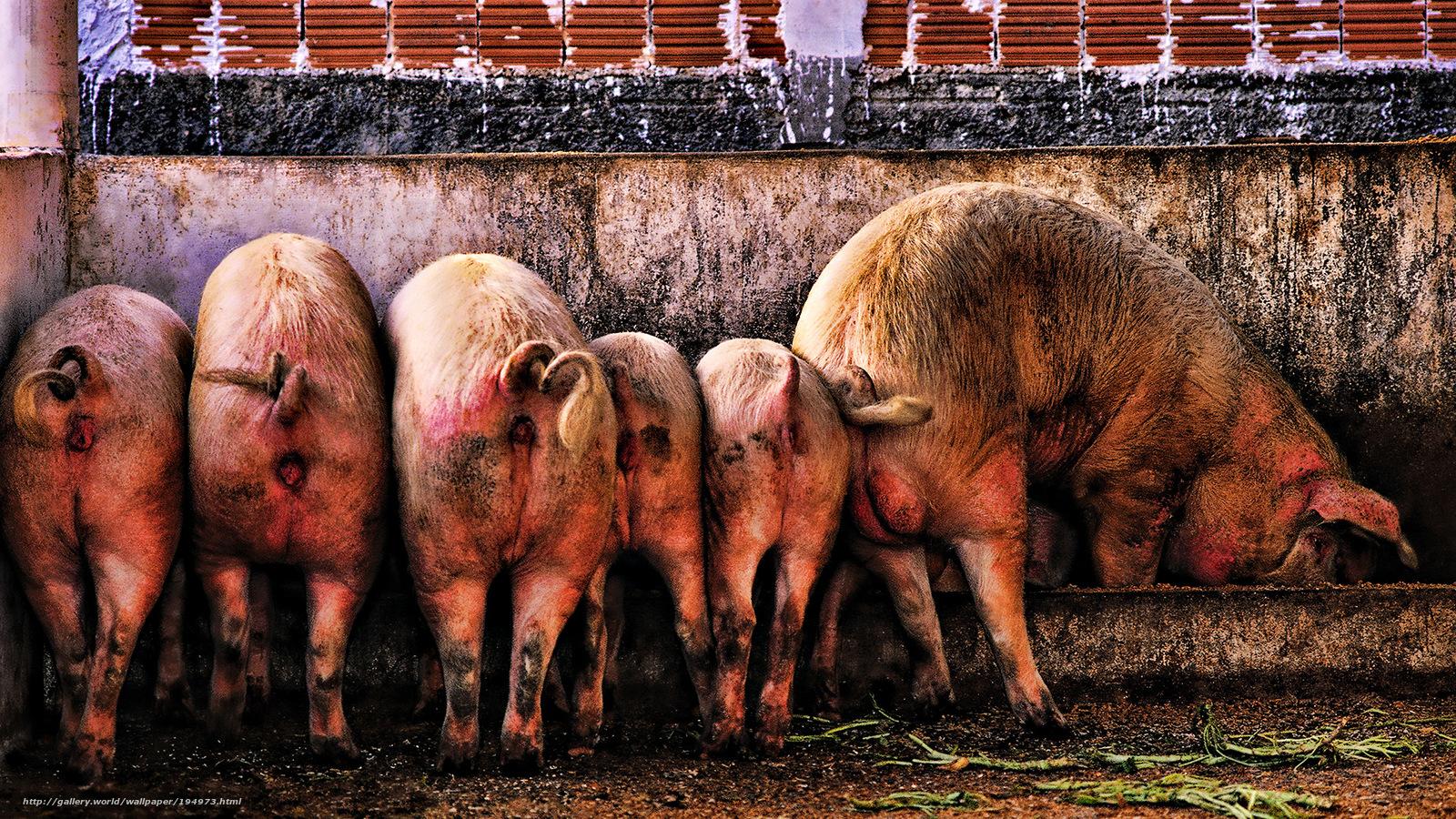 Семейный клуб свиноермг рассказ 26 фотография