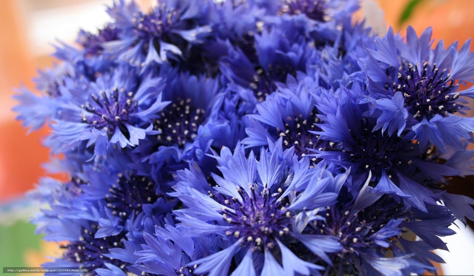 букетик, полевые цветы, васильки