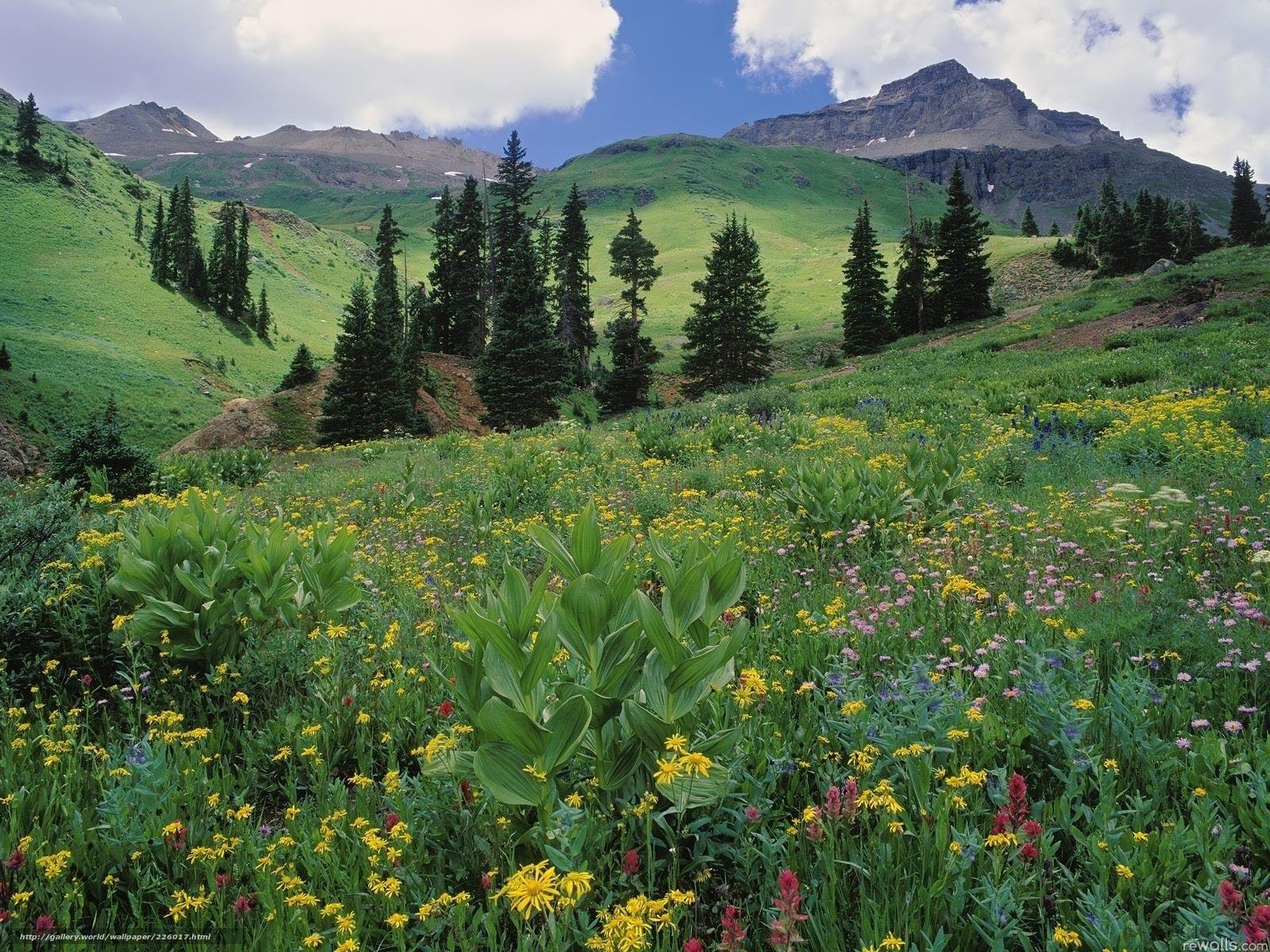 Красота растений летом 161