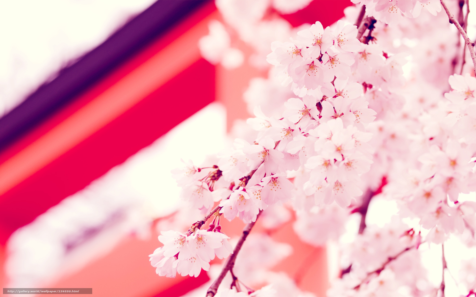 Floral wallpaper  Flower amp Cherry Blossom wallpapers