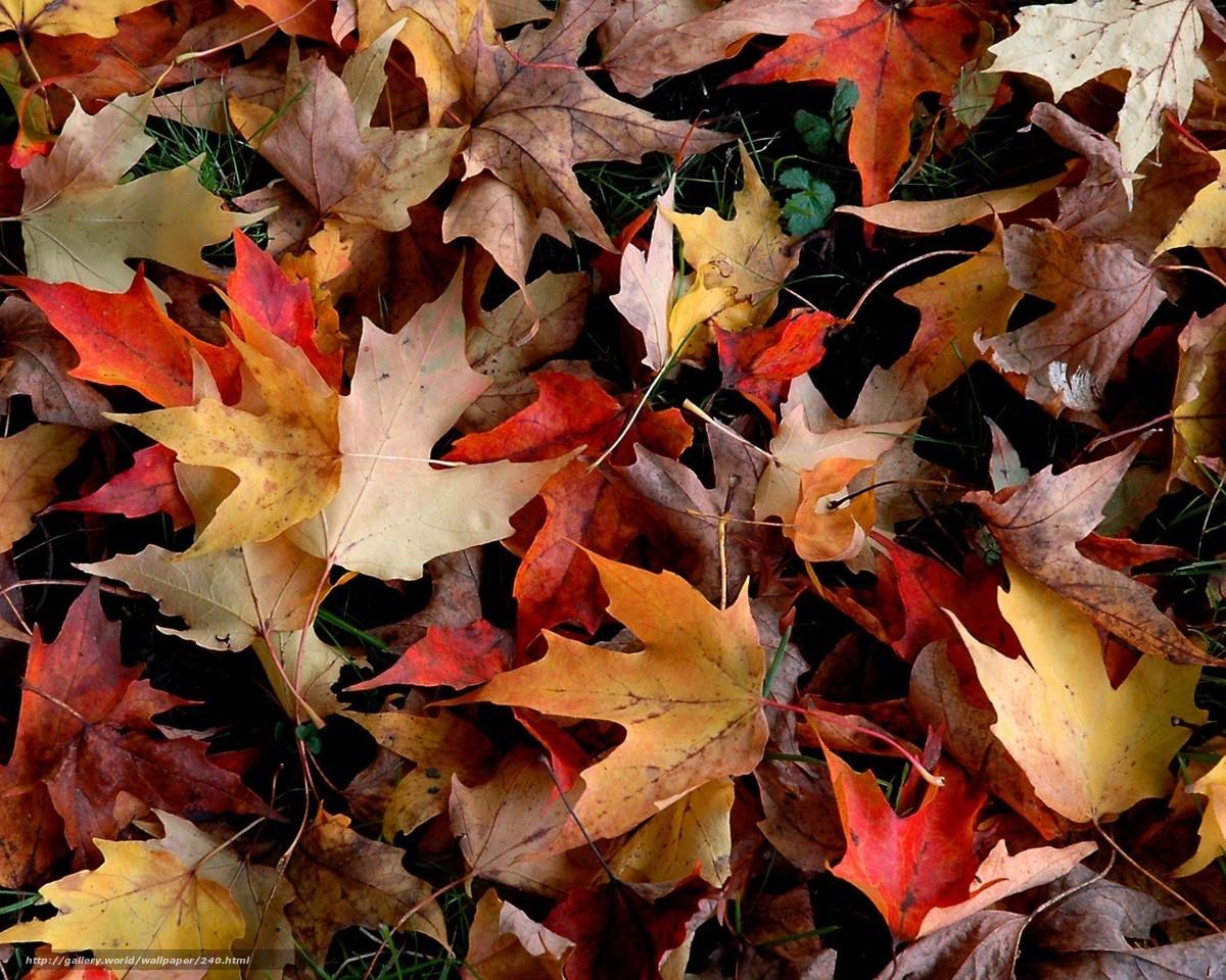 картинки на ватсап красивые осенние выяснила