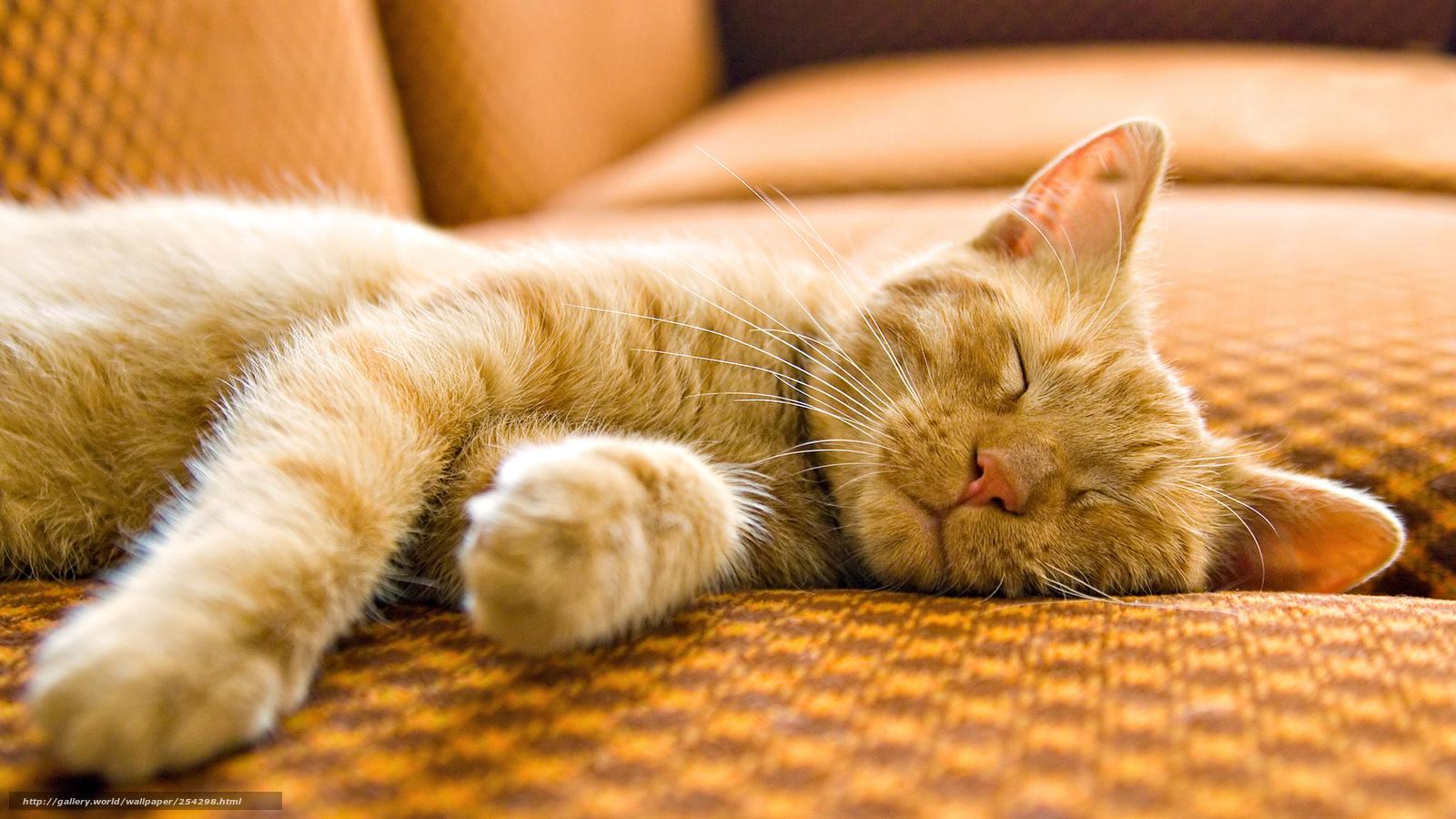 Толстуха спит на матрасе фото 16 фотография