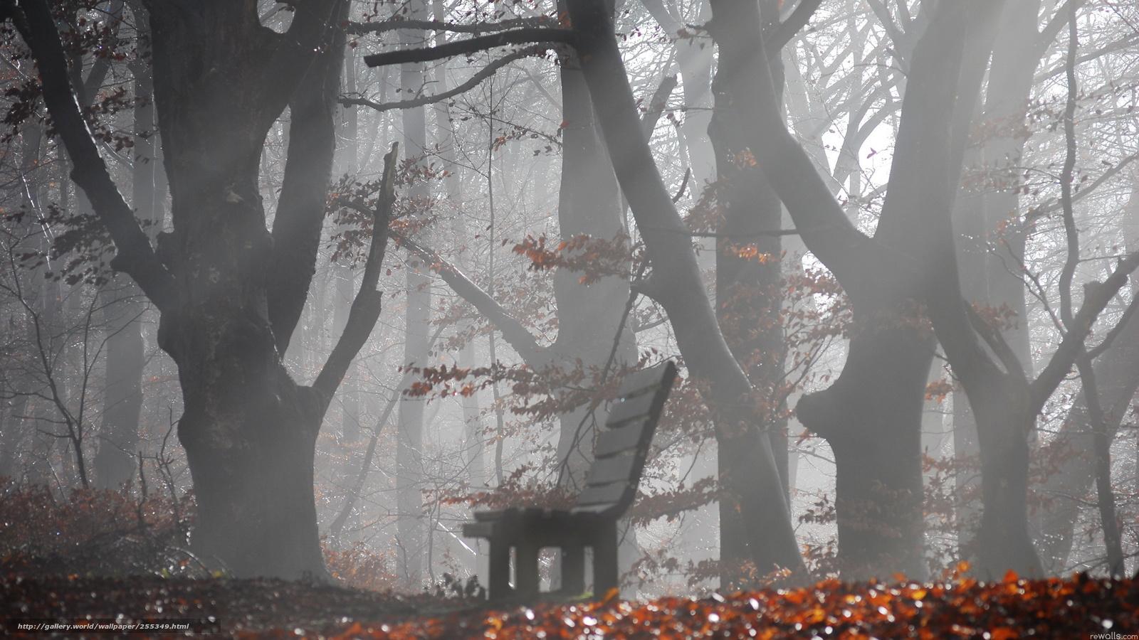 Фотографируем в непогоду: снег, дождь, туман