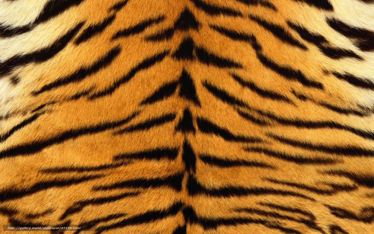 Carta da parati Strisce, pelliccia, tigre, a strisce, pelle №27150 ...